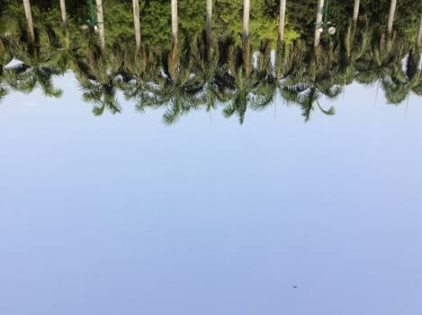 Sky Landscape Tree #11123