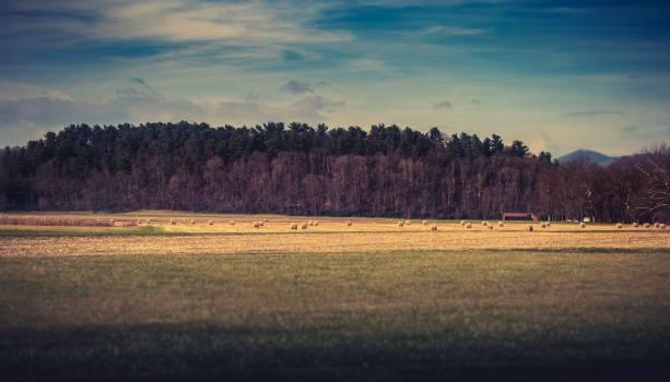 Plain Land Landscape #111915
