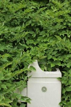 Parsley Plant Herb Free Photo