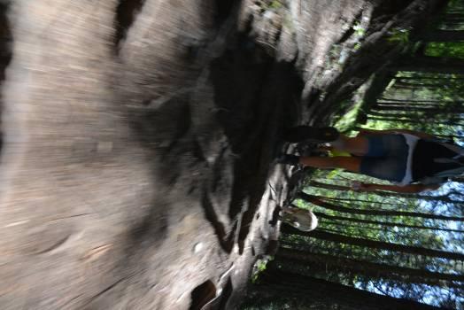 Skunk Musteline mammal Mammal #111993