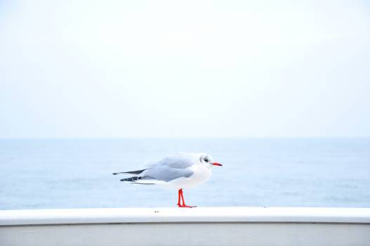 Sky Jet Shorebird #11199