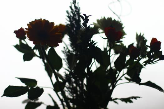 Bouquet Decoration Sunflower Free Photo