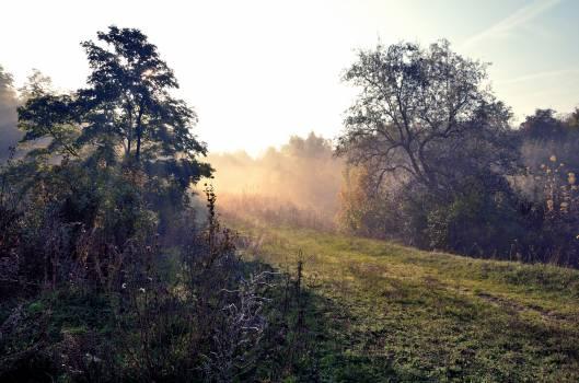 Landscape Tree Forest #112529