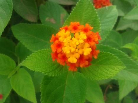 Plant Flower Leaf Free Photo