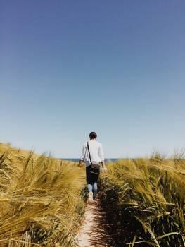 Field Wheat Landscape #112874