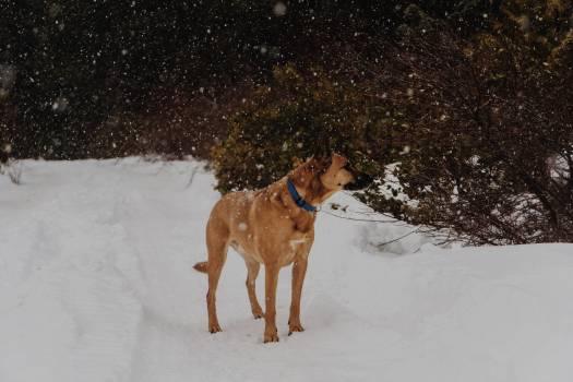 Hunting dog Dog Hound #113087
