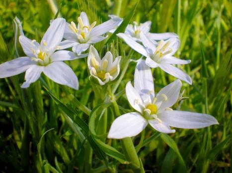Plant Vascular plant Flower #113194