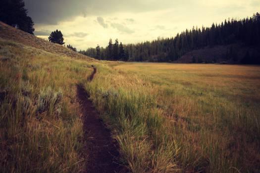 Field Land Landscape #11322