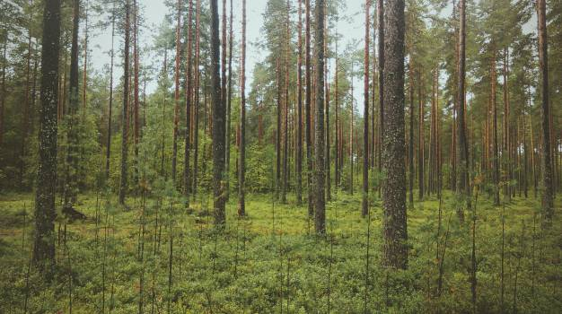 Tree Landscape Forest #11335