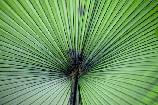 Leaf Plant part Plant #11358