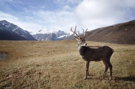 Antelope Hartebeest Bovid #11359