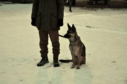 Dog Hunting dog Shepherd dog #113731