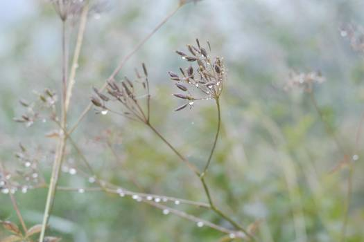 Plant Leaf Grass Free Photo
