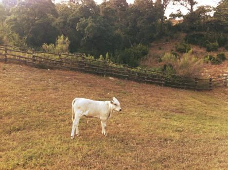 Grass Field Landscape #11403