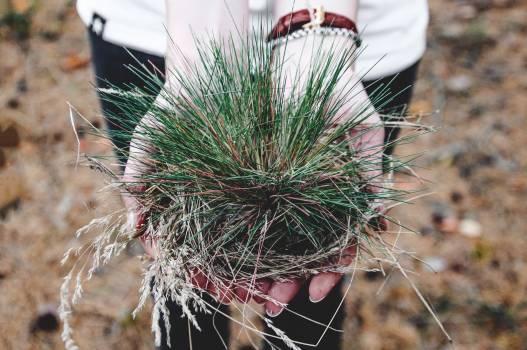 Cardoon Sea urchin Vegetable Free Photo