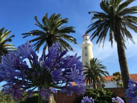 Palm Tree Tropical Free Photo
