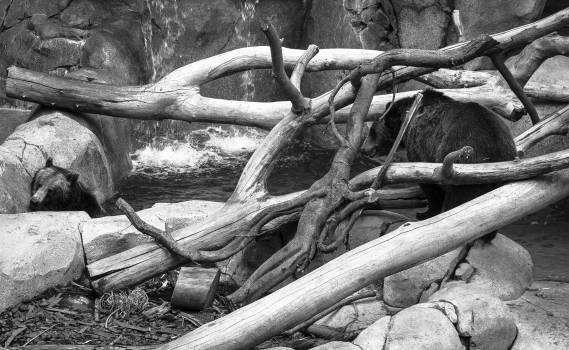 Tree Worm fence Wood Free Photo