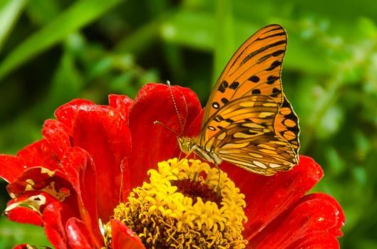 Orange Flower Butterfly Free Photo