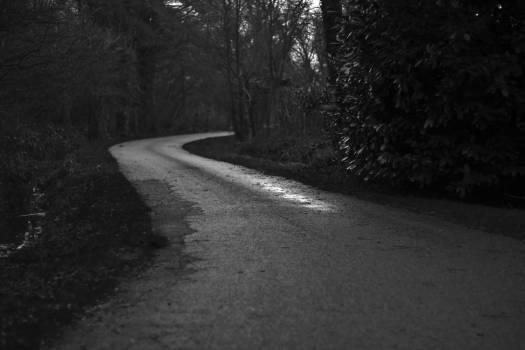 Way Road Landscape #11460