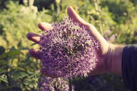 Flower Plant Purple #114664