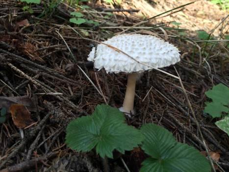Mushroom Vegetable Fungus Free Photo