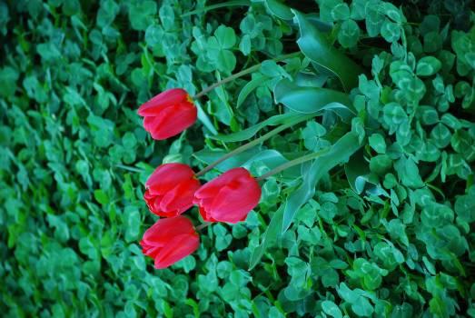 Flower Plant Leaf Free Photo