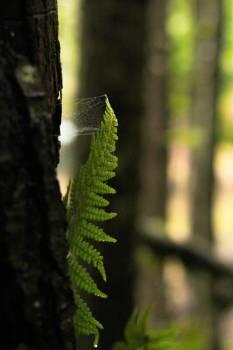 Fern Leaf Plant Free Photo