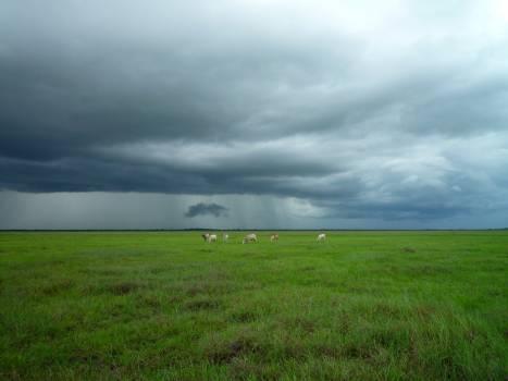 Field Grassland Plain #11481