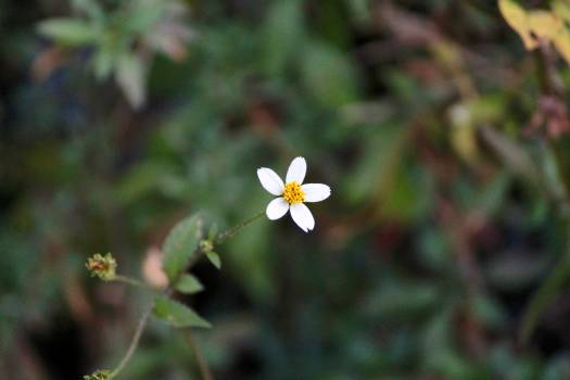 Vascular plant Plant Herb #115359