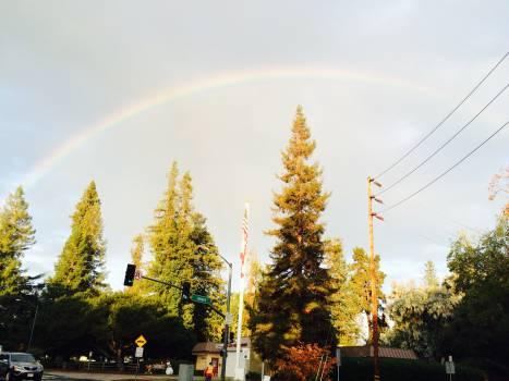 Bow Rainbow Christmas Free Photo