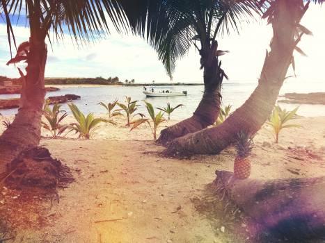 Sea Sand Beach #11551