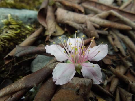 Flower Fungus Plant Free Photo