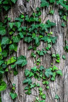 Plant Tree Leaf #11559