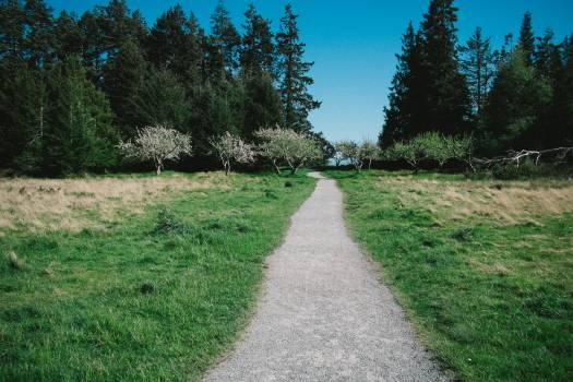 Road Way Landscape #11561