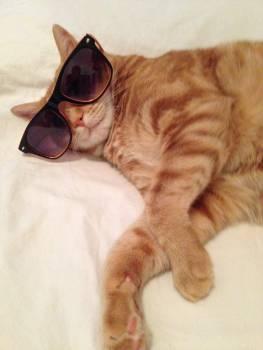 Cat Feline Animal Free Photo