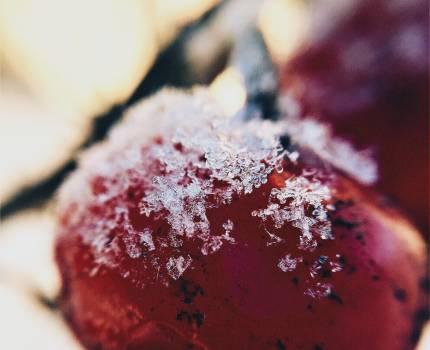 Berry Dessert Food Free Photo