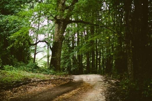 Tree Landscape Forest #11584