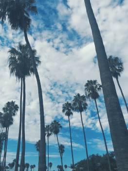 Coconut Palm Flagpole Free Photo