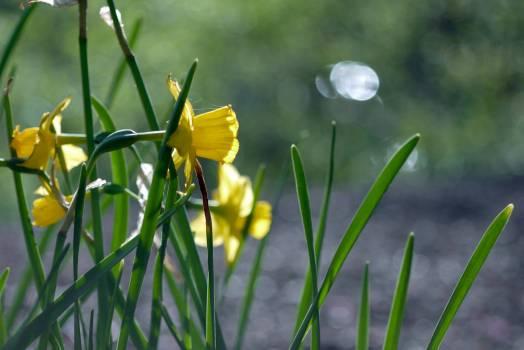 Vascular plant Herb Plant #115959