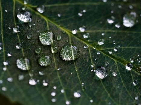 Drop Leaf Rain #11608