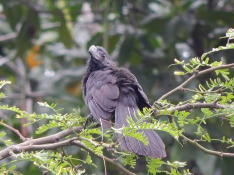 Bulbul Nightingale Jay Free Photo