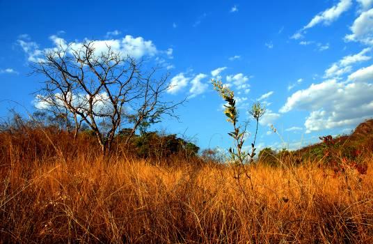 Field Grass Landscape #116681