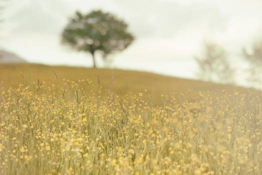 Wheat Grain Cereal #11671