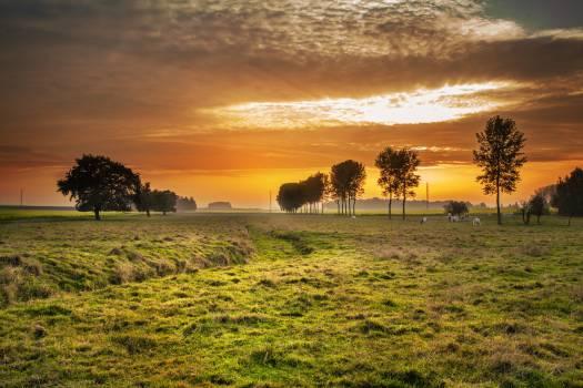 Field Landscape Grass #11697