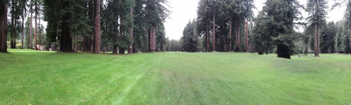 Golf Rough Grass Free Photo