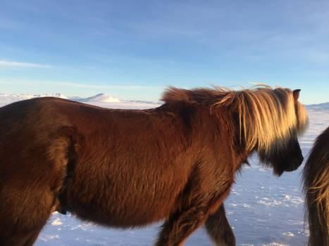 Horse Animal Cattle #117277