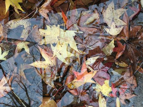 Pinwheel Wheel Autumn Free Photo