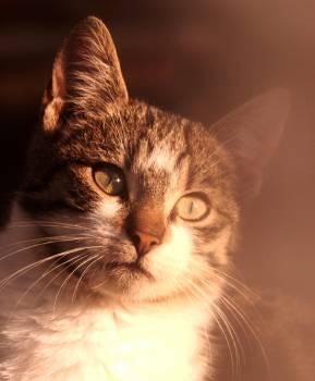 Cat Feline Animal #11771