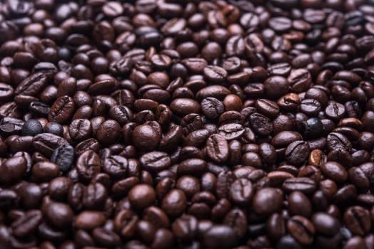 Seed Bean Beans #11787