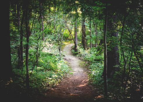 Forest Tree Landscape #11825